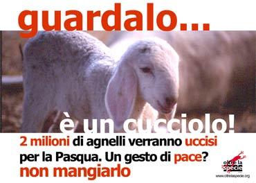 agnello.jpg